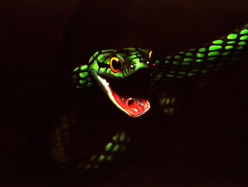 airbru_SnakeDesktop