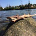 Grinning Driftwood Shark