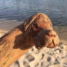 Treibholz-Hundekopf