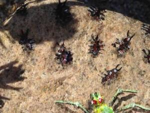 spider ants detail2