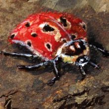 Stones #6 – Lady Beetle