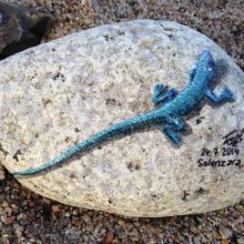 Stones #5 – Lizards again