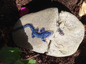 blue lizard 2